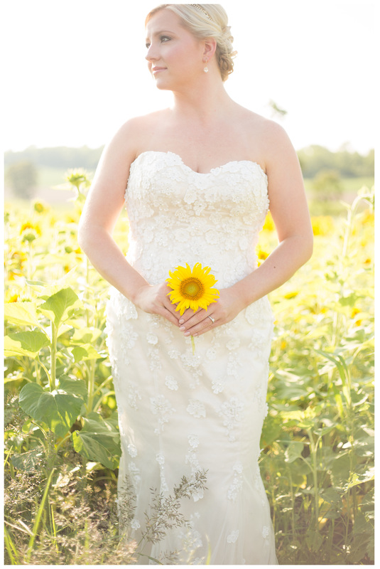 sunflower field photos, sunflower field bridal portraits, sunflower bride, bridal portraits, radford va wedding photographer, radford wedding photographer, blacksburg wedding photographer, roanoke wedding photographer, virginia wedding photographer, bridal photos, doe creek farm wedding, amrheins bridal roanoke va, amrheins bridals and formals, wedding dress sottero and midgley